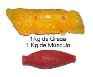 volumen-grasa-musculo1